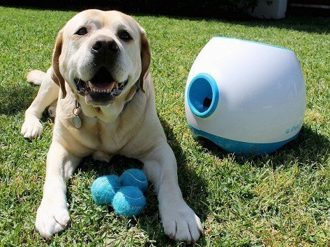tennis ball launcher for larger dogs