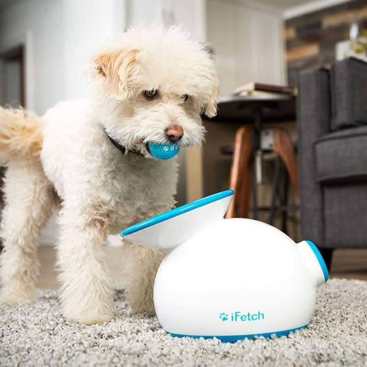 tennis ball launcher for small dogs