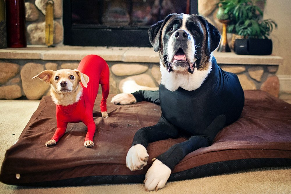 Shedding Suit for Dogs