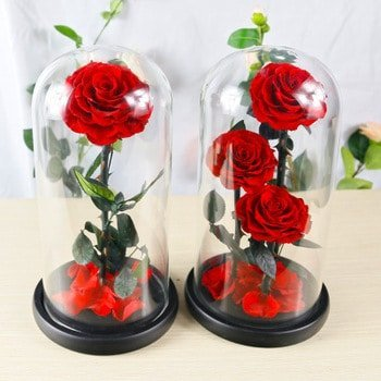 endless preserved rose