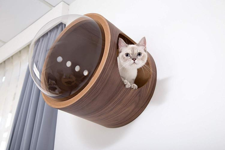 bubble-window-wall-mounted-cat-bed