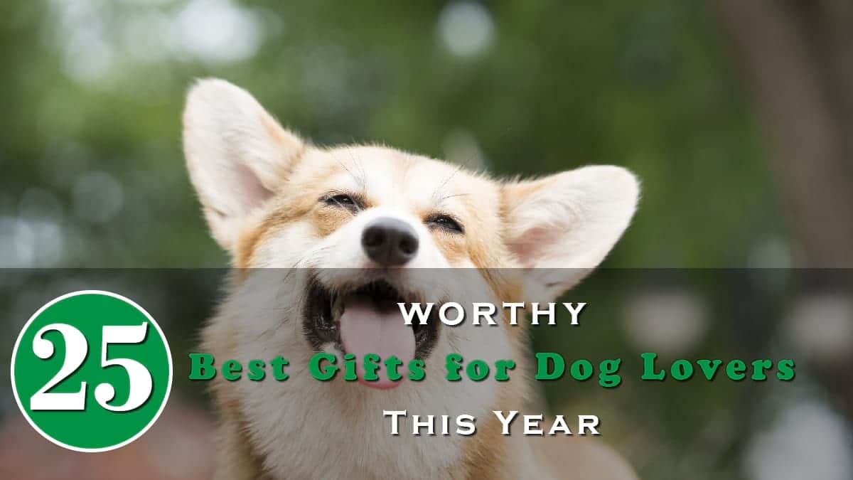 25 Worthy Best Gifts for Dog Lovers This Year Banner