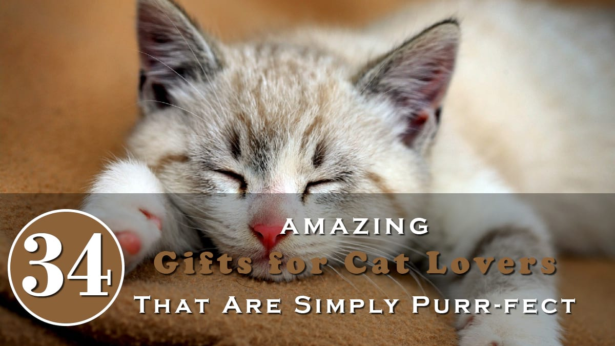 34 Amazing Gifts For Cat Lovers That Are Simply Purr-fect Banner