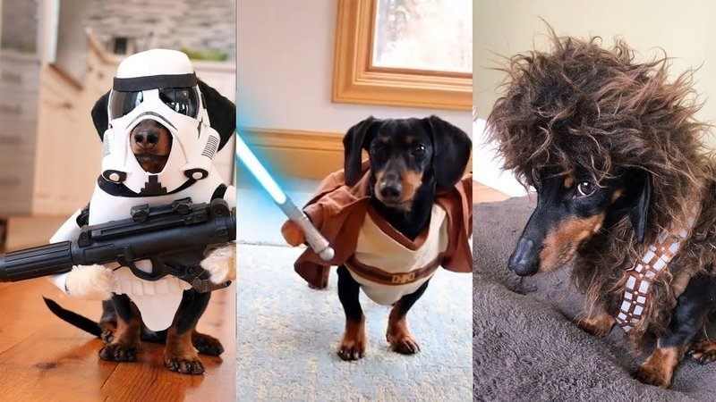 funny dogs in star wars costumes