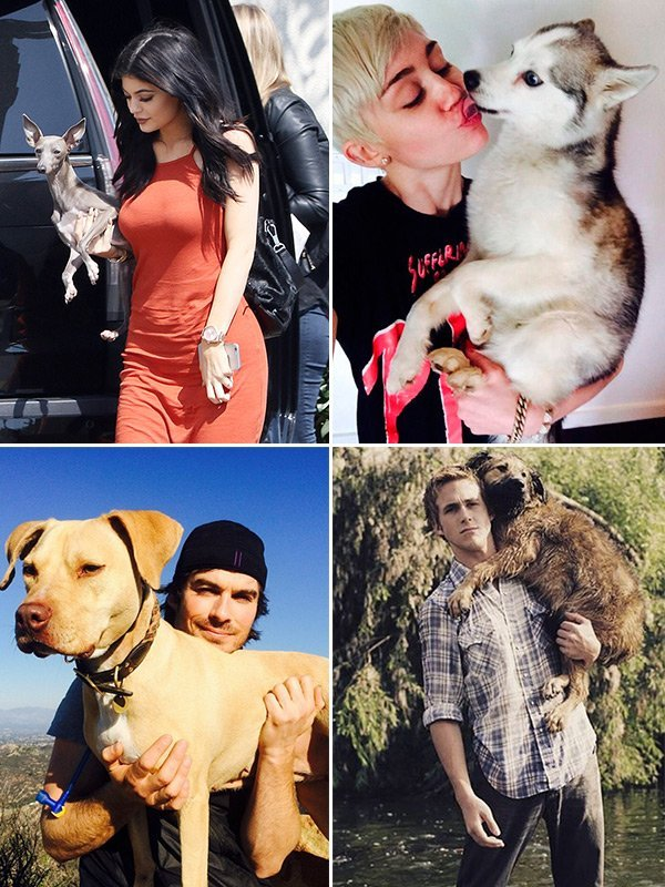 national pet day celebrities
